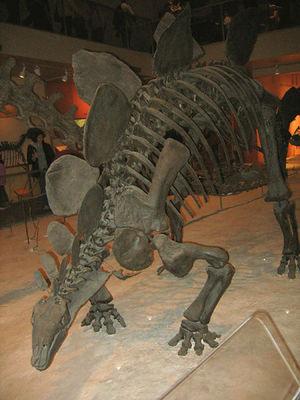 Stegosaurus ZUM Grundschul Wiki